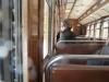 j-on-the-train